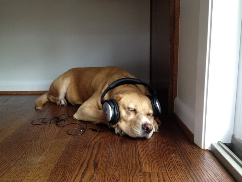 Sometimes you just need to sit in a corner and listen to a podcast. Credit: Flickr/David Hale Smith (Creative Commons)